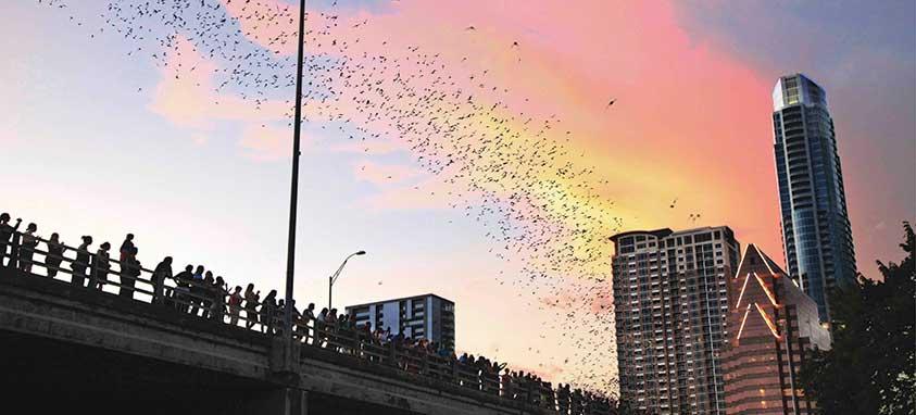 South-Congress-Bat-Bridge