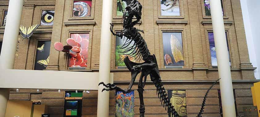 denver-museum